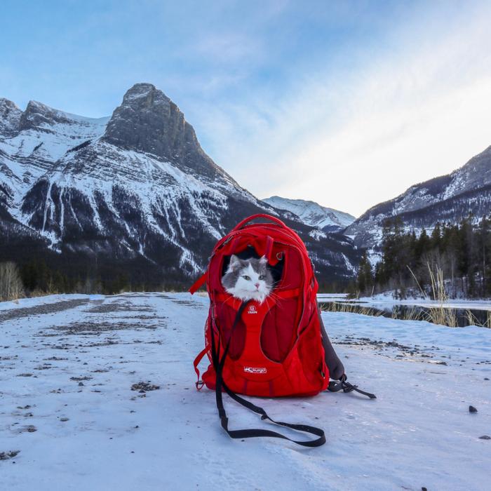 Канадские Скалистые горы в Альберте.