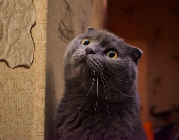 Что вы говорите? Завтра уже понедельник? Не может быть!