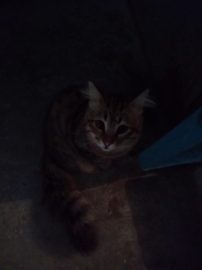 Соседский котик Кот, Котомафия, Длиннопост
