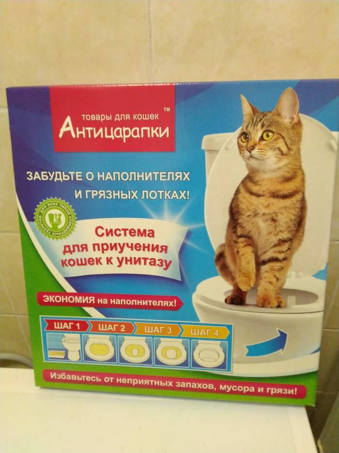 Рыжий, наглый, красивый! Кот, Длиннопост, Рыжий, Домашние животные