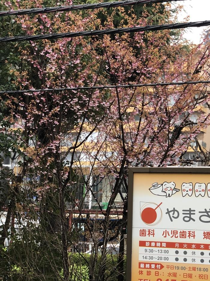 Ещё одна точка зрения на работу в Японии. Япония, Работа в японии, Работа мечты, IT, Иммиграция, Длиннопост