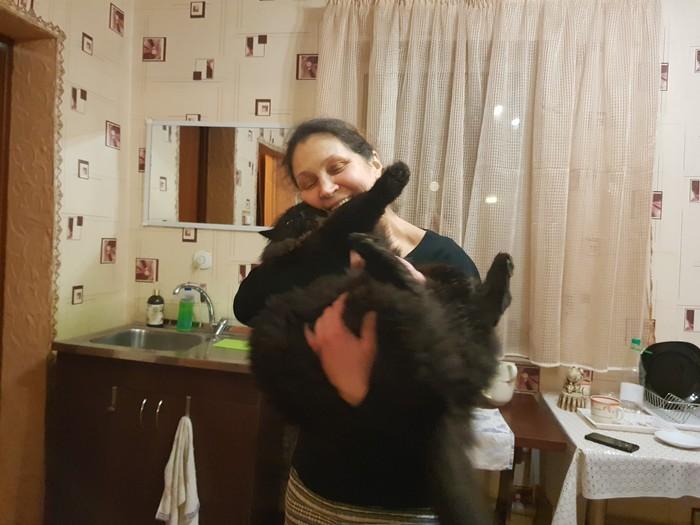 Бабушка и котик