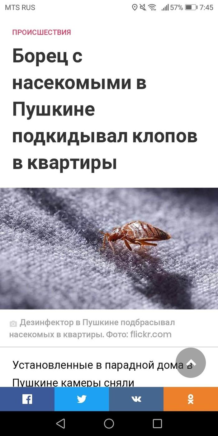 Подбросил  тараканов и клопов в квартиру. Тараканы, Длиннопост, Клопы, Дезинсекция, Пушкин