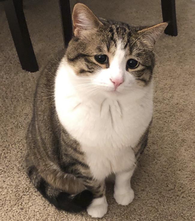 """""""Мой кот делает такие глаза каждый раз, когда хочет еды.Теперь вы знаете,почему он такой пухлый"""""""