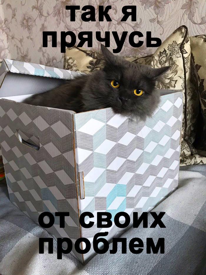 Кот в кубе.