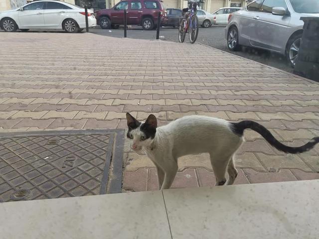 Эта милая кошка всегда приходила ко мне в офис в полдень. Я выделил часть денег, чтобы купить ей еду. Теперь мы обедаем вместе каждый день.