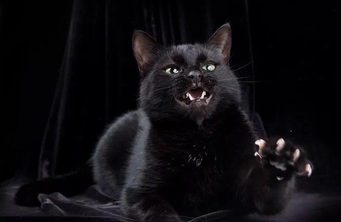 Суеверия о чёрных котах явно не имеют никаких оснований Кот, Суеверия, Длиннопост, Домашние животные