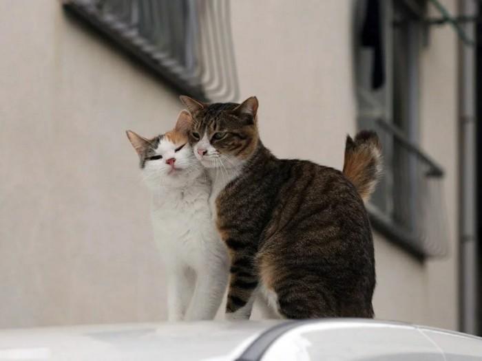 Настоящая Любовь!) Кот, Трехцветная кошка, Домашние животные