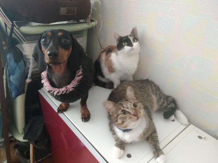 Кошка с улицы. Продолжение 17 Кот, Домашние животные, Длиннопост
