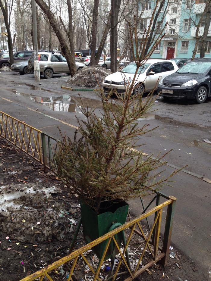 Слабак Ёлка, Новый год, Весна