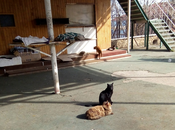 Одесские коты Кот, Пушистый, Одесса, Длиннопост