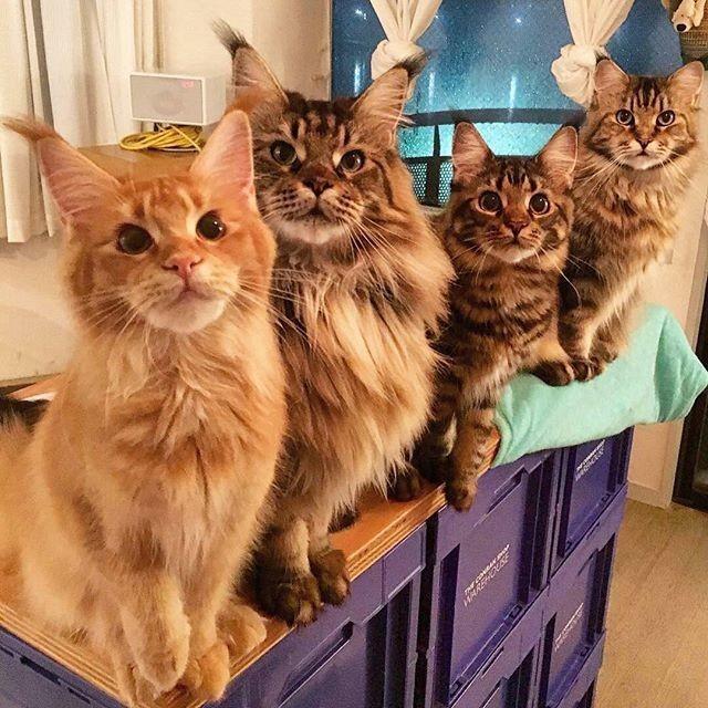 Очаровательная банда