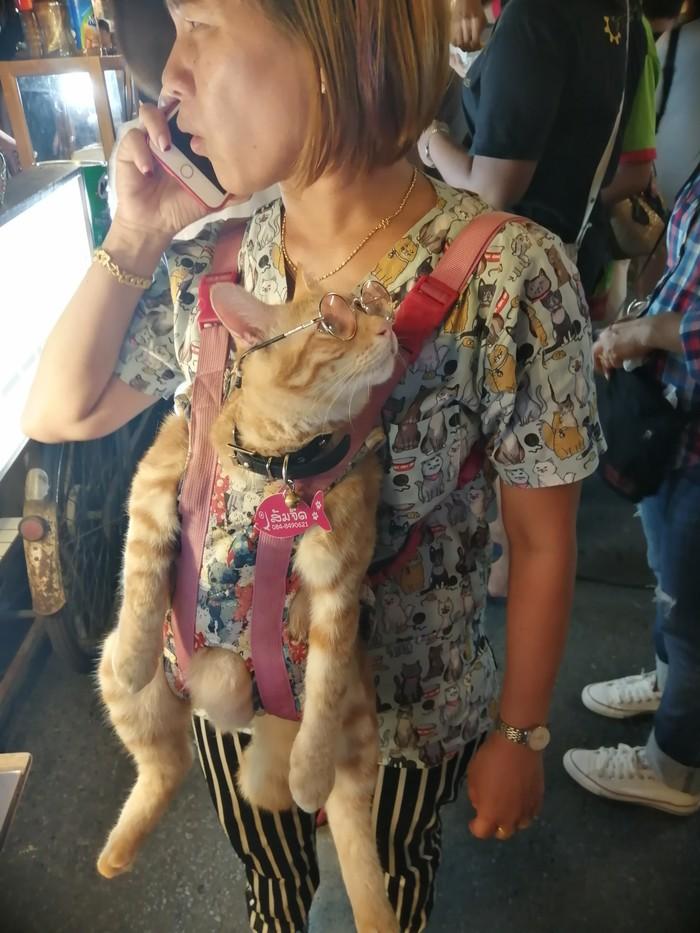 Кот-аристократ на рынке Таиланд, Кот, Вертикальное видео, Видео, Длиннопост, Домашние животные