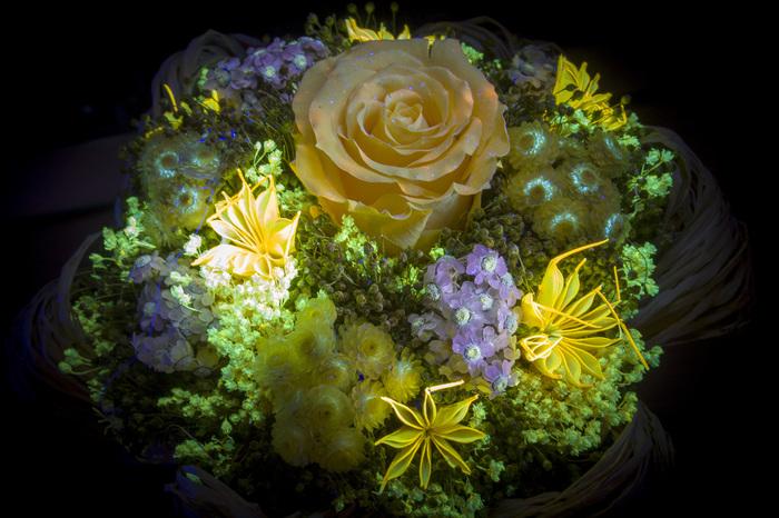 Фотография в ультрафиолете, проба №3 Ультрафиолет, Фотография, Начинающий фотограф, Флуоресценция, Uvivf, Цветы, Длиннопост