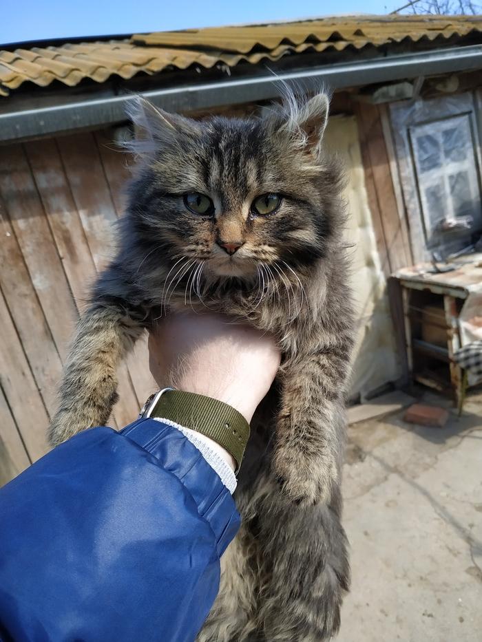 Сельский котик