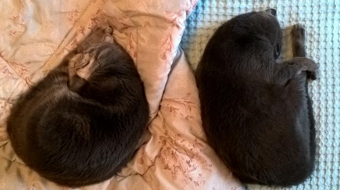 Котокреветки Кот, Домашние животные