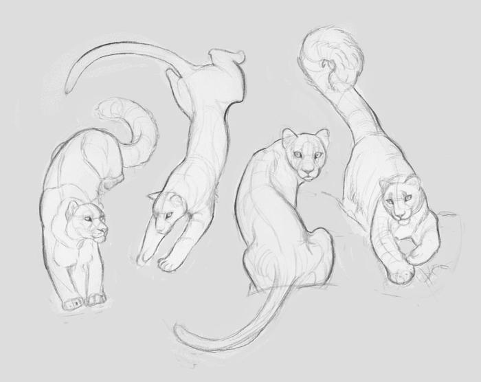 Скетчи больших котиков Скетч, Арт, Лев, Кот, Большие кошки, Животные, Анималистика, Рисунок