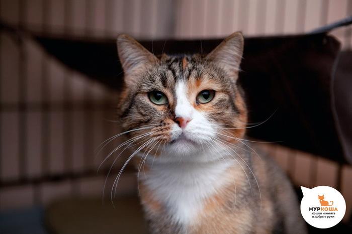 История кошки Долли, которую хотела утопить собственная хозяйка. Приют для животных, Приют муркоша, Муркоша, Кот, Длиннопост, Трогательно, Реальная история из жизни