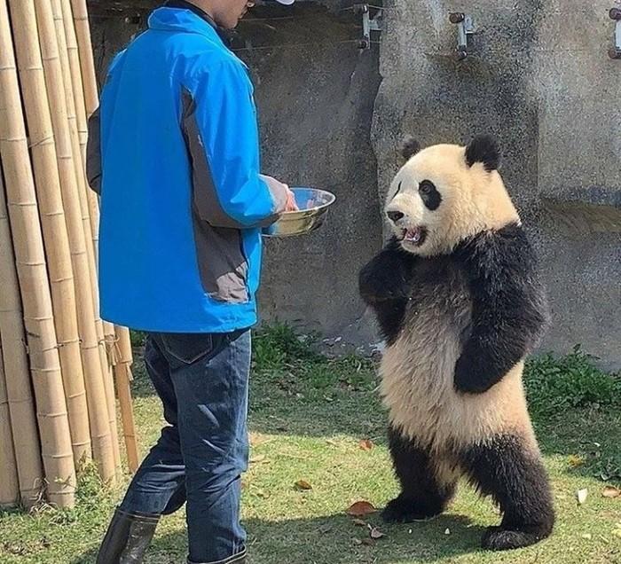 Так блэт, где мой бамбук?