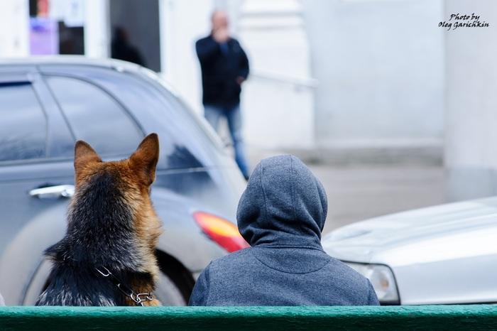 Очередная серия репортажных снимков с выставок собак, прошедших по Югу России в 2018 году, приятного просмотра))) Собака, Собаки и люди, Выставка, Выставка собак, Анималистика, Длиннопост, Домашние животные