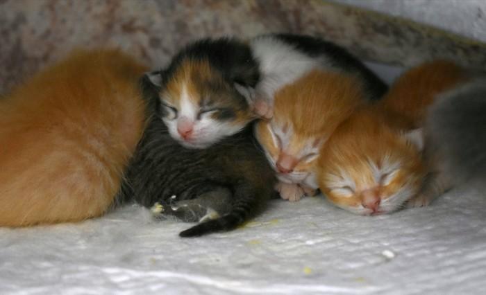 Спокойной ночи! Кот, Котята, Сон, Милота, Приют для животных, Тольятти, Домашние животные