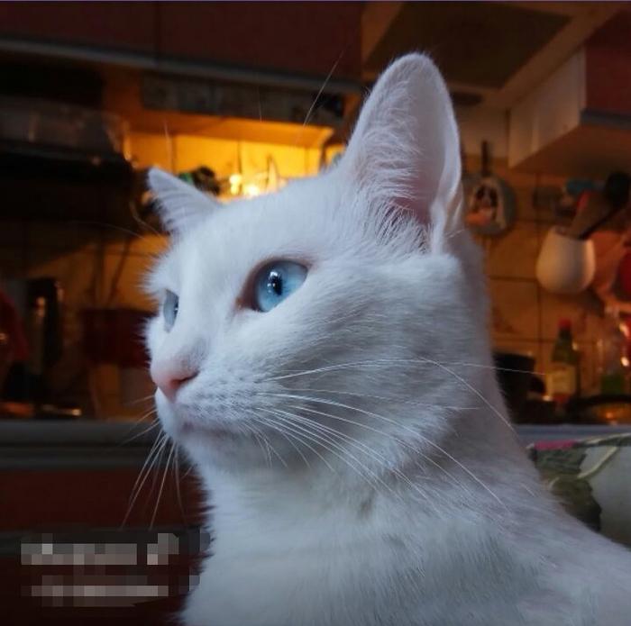 Отдам кошечку в добрые руки Кот, В добрые руки, Домодедово, Москва, Помощь животным, Без рейтинга, Ищу дом, Длиннопост