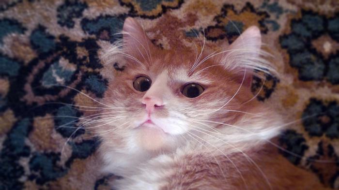 Воду - матросам! Кот, Шнуров, Инициатива, Домашние животные
