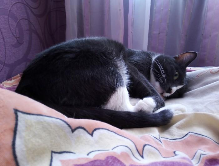 Познал... или настроение кот Познание, Кот, Хватит это терпеть, Настроение, Домашние животные