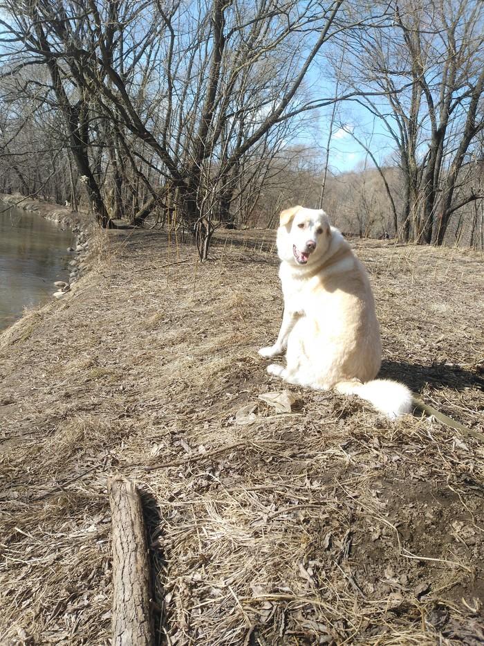 Дождались теплых денёчков) Собака, Лосиный остров, Весна, Длиннопост, Пост 1 апреля 2019 г