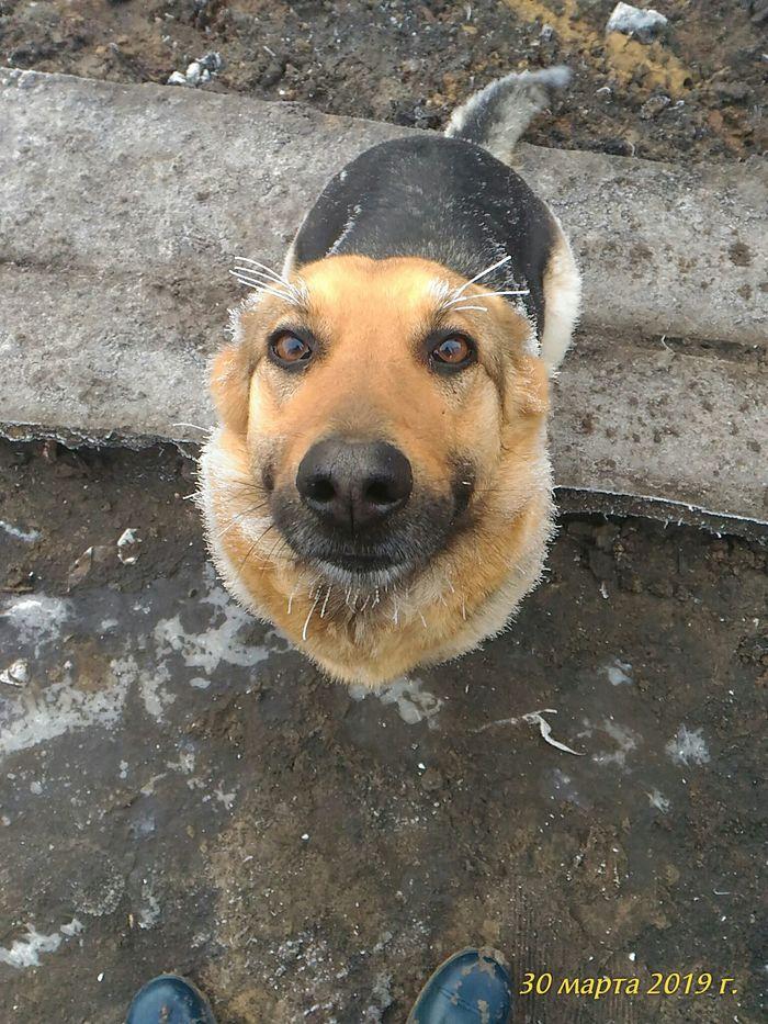 Жужа накрасила ресницы Собака, Жужа, Вахта, Милота, Домашние животные