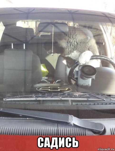 У дяди собака породы акита очень любит ездить в машине, так он делает, когда хочет кататься Акита ину, Собака, Машина, Водитель