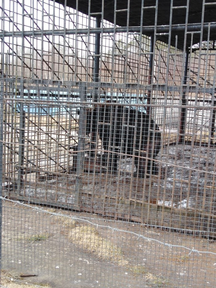 Надо помочь! Живодеры, Тверская область, Трасса м10, Негатив, Без рейтинга, Медведь