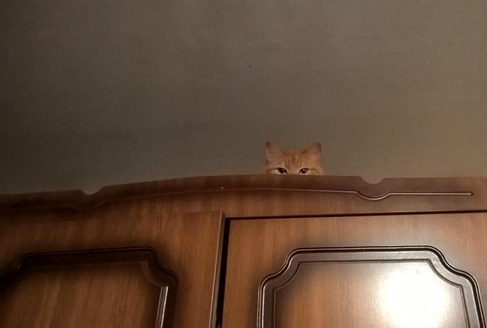 Скрытое наблюдение