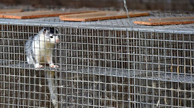 В Германии закрыли последнюю норковую ферму Общество, Животные, Германия, Норка, Ферма, Общественное мнение, Tvzvezdaru, Бизнес