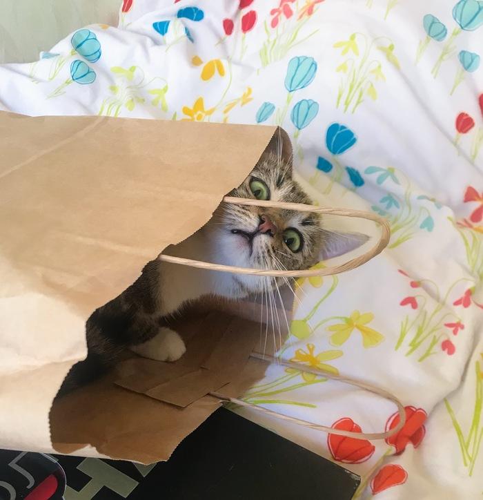 Ты не ты, когда нашёл пакет