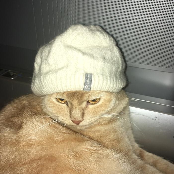 Персик и шапочка Кот, Персик, Шапка