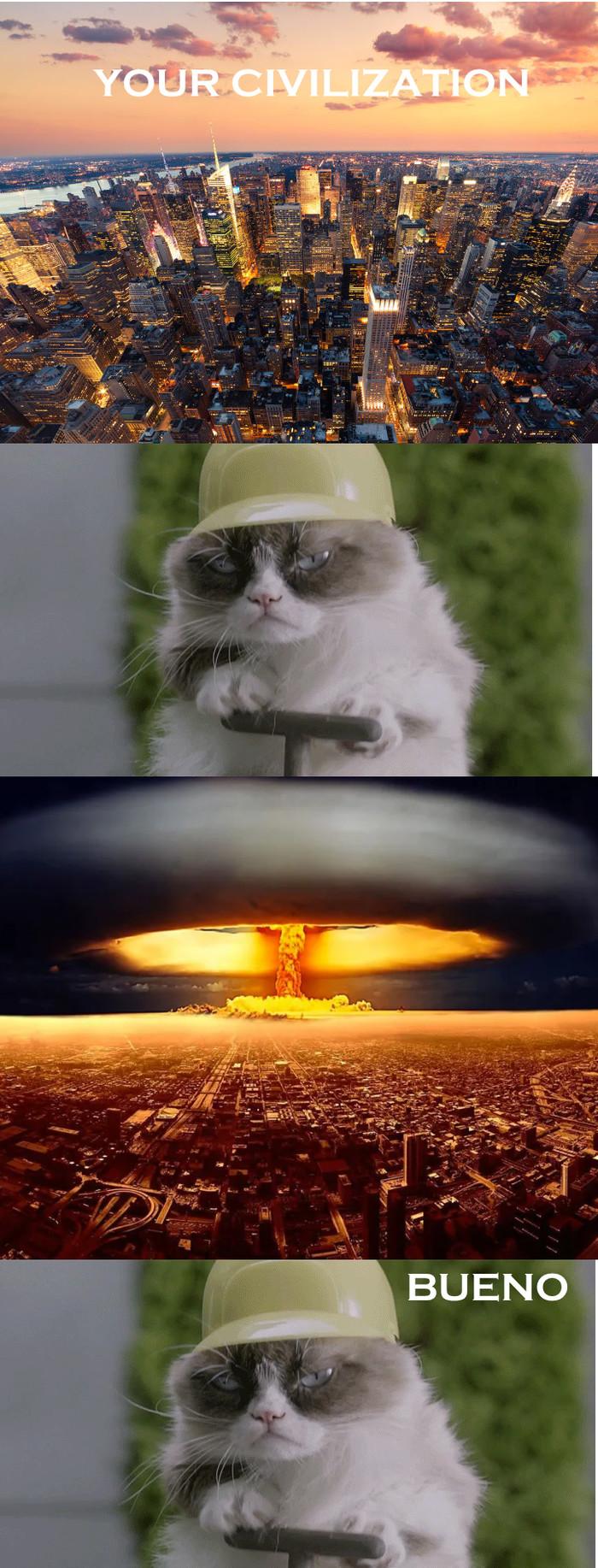 Bueno Cat Кот, Bueno, Длиннопост