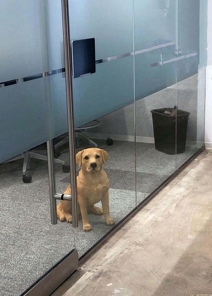 Как испортить день. Дважды Собака, Офис, Грусть, Честно украдено, Длиннопост