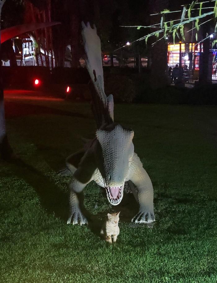 Самый бесстрашный кот в мире и нападение динозавра в Дубае Кот, Парк, Развлечения, Животные, Видео, Смешное, Юмор
