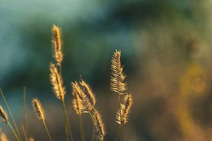 Воспоминания о лете Лето, Солнце, Nikon, Юпитер-37