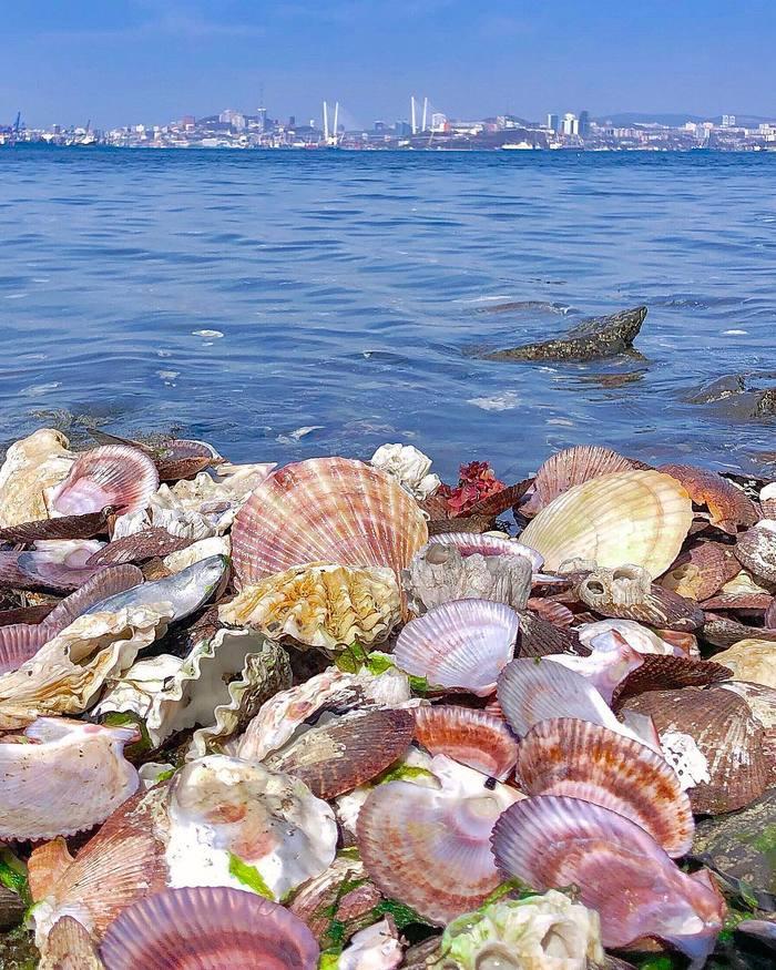 Владивосток Море Владивосток, Фотография, Море, Ракушки, Мост, Приморский край, Ракурс, Небо