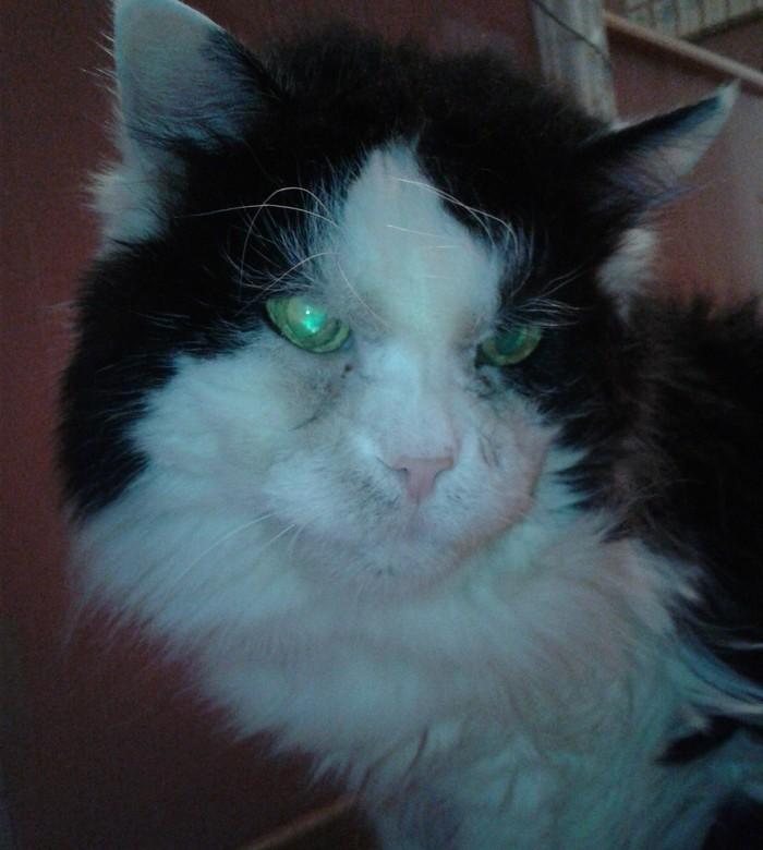 Кеша, 20 лет Кот, Старый