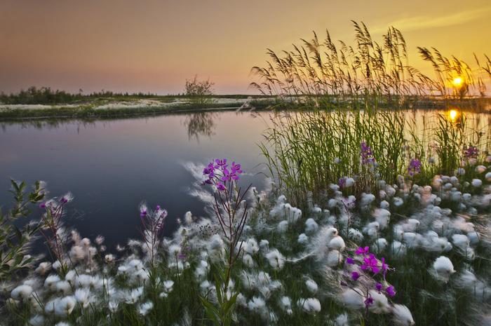 Ямал Фотография, Ямал, Тайга, Тундра, Северное сияние, Крайний север, Вечная мерзлота, Холод, Длиннопост