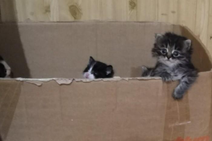 Ты это, заходи если что... Котята, Милота, Домашние животные, Фото на тапок, Кот, Коробка и кот