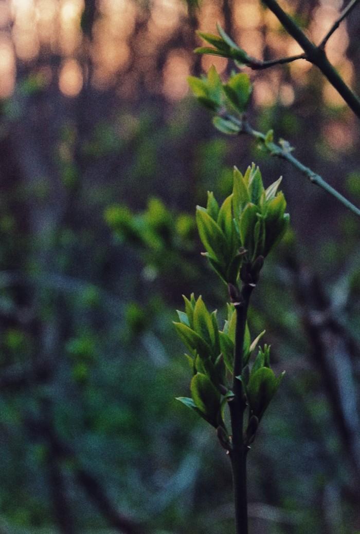 Весна Ставрополь, Фотография, Fujifilm, Весна, Синенькие цветочки, Бессмысленность, Лес, Вечер, Длиннопост