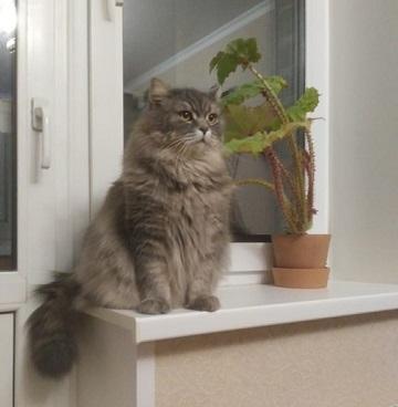 ПОТЕРЯЛСЯ КОТ!!! Потерялся кот, Серый кот, Кот, Потеряшка, Помощь, Без рейтинга, Москва