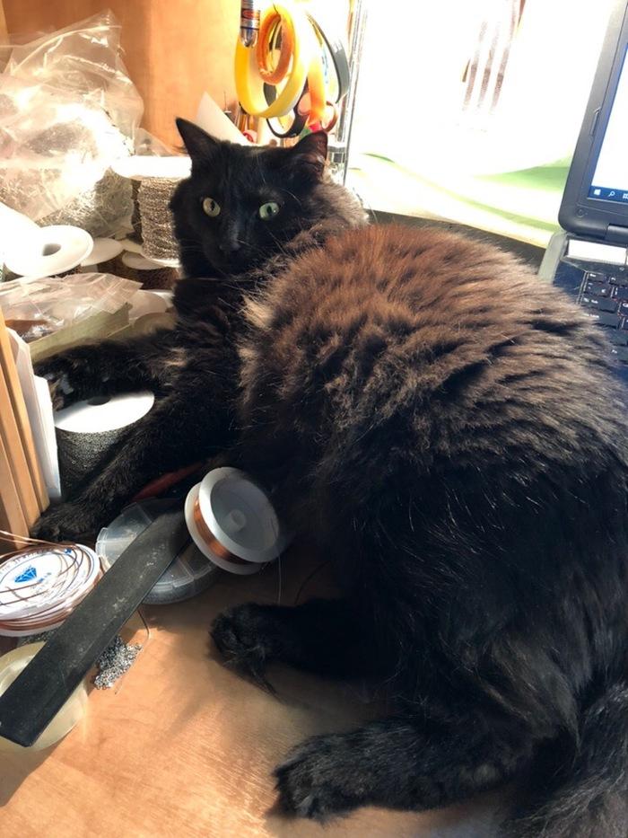 Жирен и красив Кот, Черный кот, Жирен и прекрасен, Домашние животные