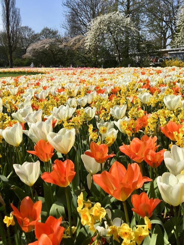 Весна в Голландии