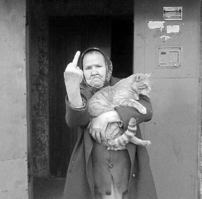 Про бездомных животных Животные, Кот, Собака