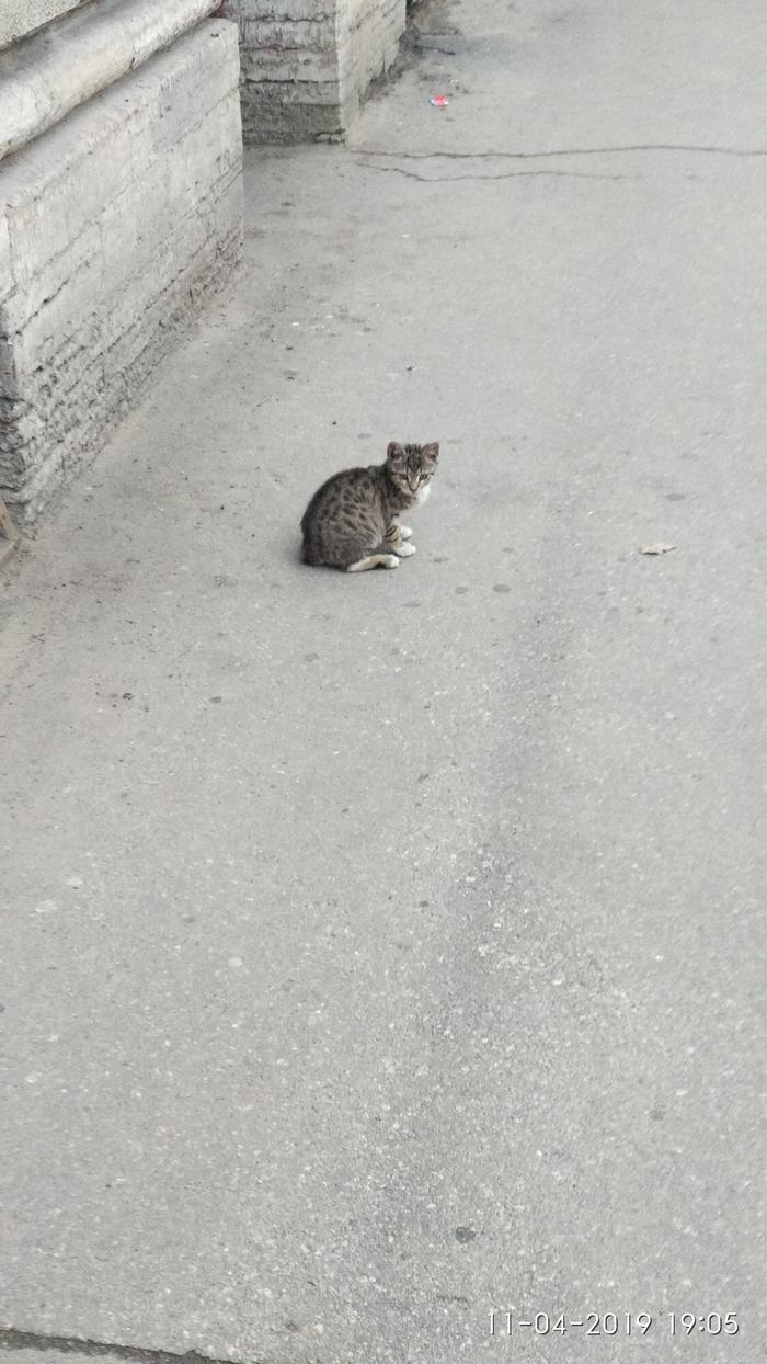 Уличный котенок, СПб. Кто хочет забрать? Кот, Потерялся кот, Уличное животное